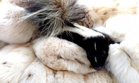 Старые шубы спасают детенышей животных