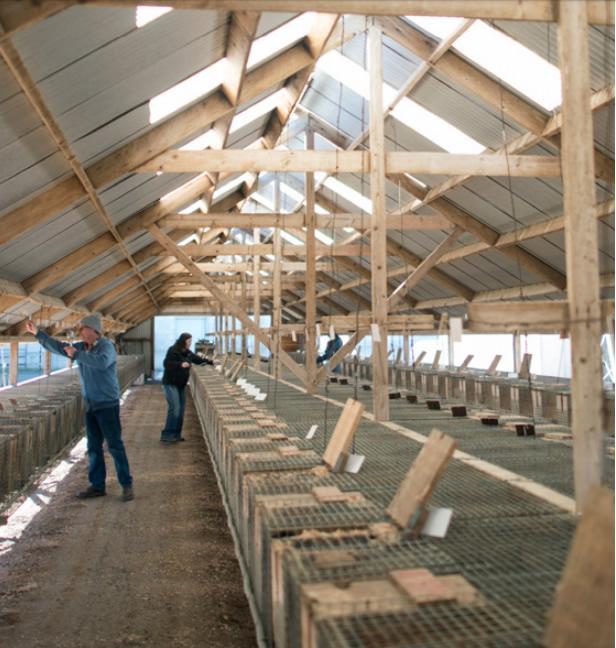 Ферма по выращиванию норки